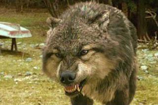 W3 twilight wolf feat 320