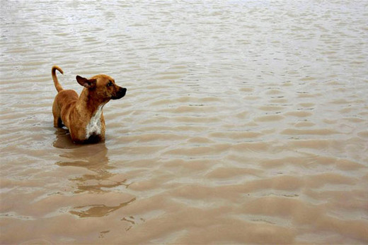 Hundreds of pets missing after quake
