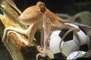 Paul the Octopus - blessed with fate
