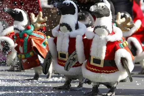 Too much eggnog? Penguins dressed up as Santa Claus and Rudolph (Reuters)