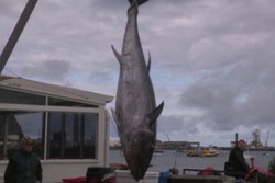 An enormous bluefin tuna with a price tag on par w...
