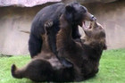 Lasser and Vania in a lovers' quarrel in Mexico City's Chapultepec Zoo