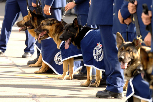 Police looking for canine recruits