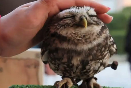 Is this the cutest owl on the internet?