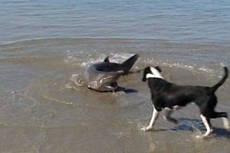 Flea the dog was delighted to have sharks washed up on the beach