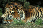 The park's receivers PriceWaterhouseCoopers say their court bid is about the welfare of the big cats