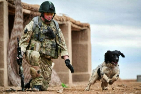 Theo the springer spaniel and his partner, the late Lance Cpl Liam Tasker