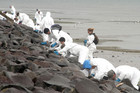 A team of volunteers works to clean oil off rocks in Tauranga in October last year (Maritime NZ)
