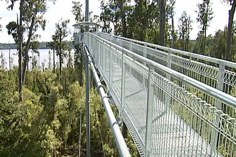 The new walkway lets visitors walk through the treetops