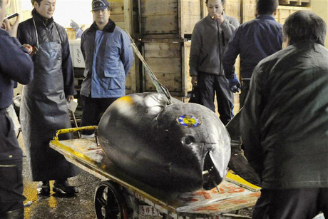 A bluefin tuna at the Tsukiji market in Tokyo, Japan (Reuters file)