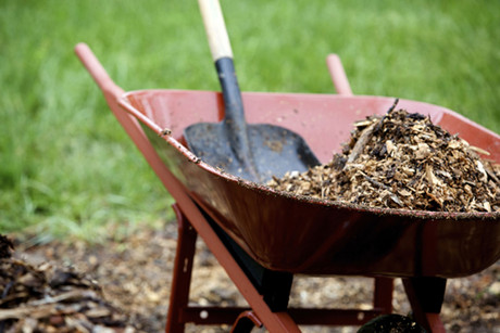 Potting mix and compost are behind the latest outbreak