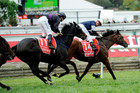 Green Moon leads the charge as Fiorente follows close behind (AAP)