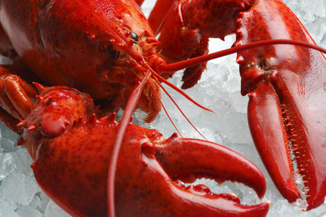 Some people estimate lobsters can live to more than 100