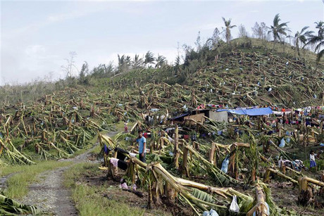 A man stands near makeshift tents surrounded by a destroyed banana plantation in New Bataan town in Compostela Valley in southern Philippines (Reuters)
