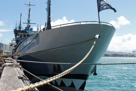 The bow of the Bob Barker is painted like a shark (photo: Frank Solomona/3 News)