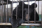 An endangered black bear inside a cage at a bile farm in Weihai, Shandong (Animals Asia Foundation, Reuters)