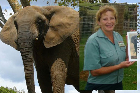 Mila the elephant and Helen Schofield (Franklinzoo.co.nz)