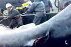 The fishermen are accused of failing to report the capture of a shark