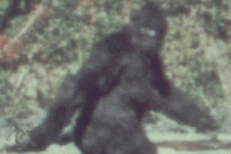 Scientists are trying to crack the mystery of Bigfoot