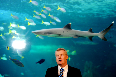 A white tip reef shark swims past environment minister Tony Burke as he announces the creation of the marine reserves network (AAP)