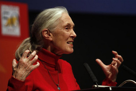 Jane Goodall addressing a meeting in 2010  (Photo: Reuters)