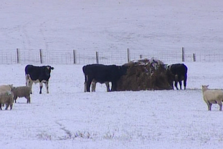 Feeding livestock is a concern for farmers during the snow