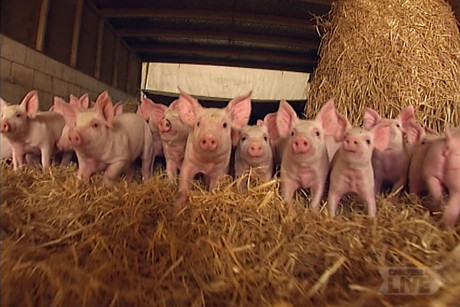 Local pork producers have taken legal action against the Ministry of Primary Industries