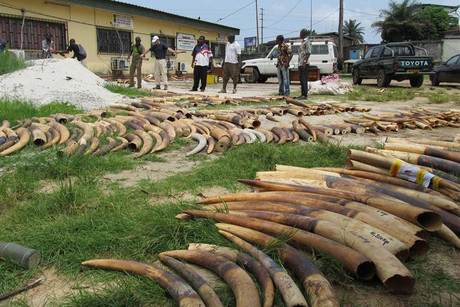 Stockpiles of ivory are seen in Gabon (Reuters)