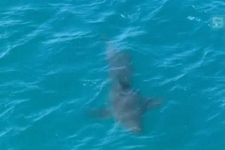 There have been five shark attack fatalities on Australia's west coast this year