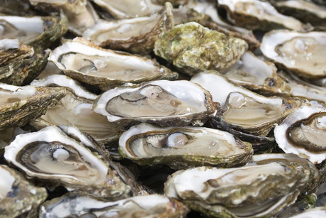 Oysters are believed to have been contaminated (file:Reuters)