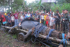 Filipinos gathering around a captured saltwater crocodile in Bunawan (AAP)