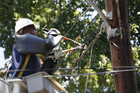 An electrical worker cuts a damaged overhead power line during emergency repairs in Wheaton, Maryland, after violent storms knocked out power to more than 3 million customers (Reuters/Jason Reed)