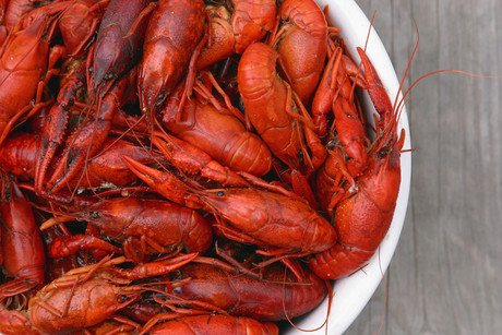 A man has been fined for selling 143 crayfish to an undercover officer (file)