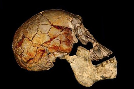 The 1470 cranium, discovered in 1972