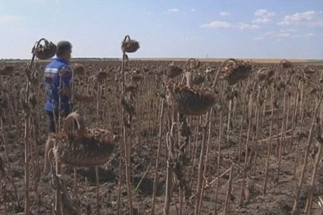 Emil Dinca has lost 80 percent of his crops to drought (Reuters)