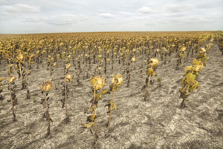 US farmers have experienced one of their worst growing seasons in memory (file pic)