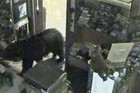 The bear waited until the store was closed before forcing the door open