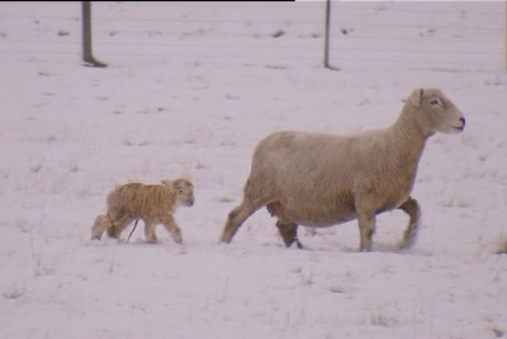 The polar blast has come in calving and lambing season down south