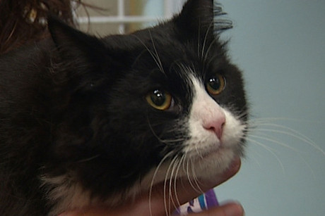 Billy the cat had a costly rescue