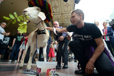 Gary the Goat with his owner comedian Jimbo Bazoobi outside Downing Centre Courts in Sydney after their case was dismissed (AAP)