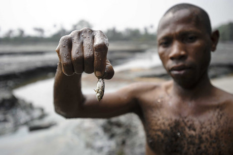 A Nigerian fisherman showing his meagre catch from a creek reported to be affected by Shell oil leaks (AAP file)