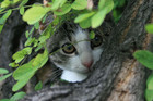 The cat was spotted in a tree on Christmas Eve (file pic)