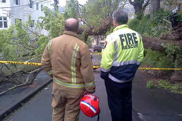 A tree has fallen on The Terrace in Wellington (Dan Hicks/3 News)