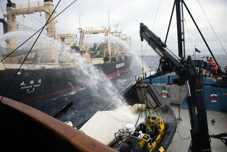 The Nisshin Maru fires water cannons at the Steve Irwin (Photo: Sea Shepherd Australia)