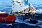 Sea Shepherd's Bob Barker (R) and fuel tanker Sun Laurel (Reuters)
