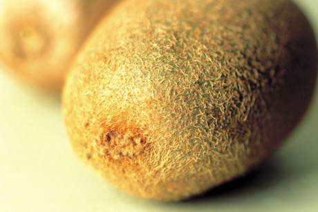 The kiwifruit disease has cost New Zealand hundreds of millions of dollars