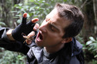 Bear Grylls eating a weta in New Zealand (AAP)