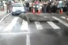 The elephant seal held up traffic for 20 minutes