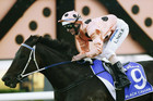 Luke Nolen rides Black Caviar (Reuters)