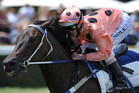 Unbeaten Australian mare Black Caviar (file pic)
